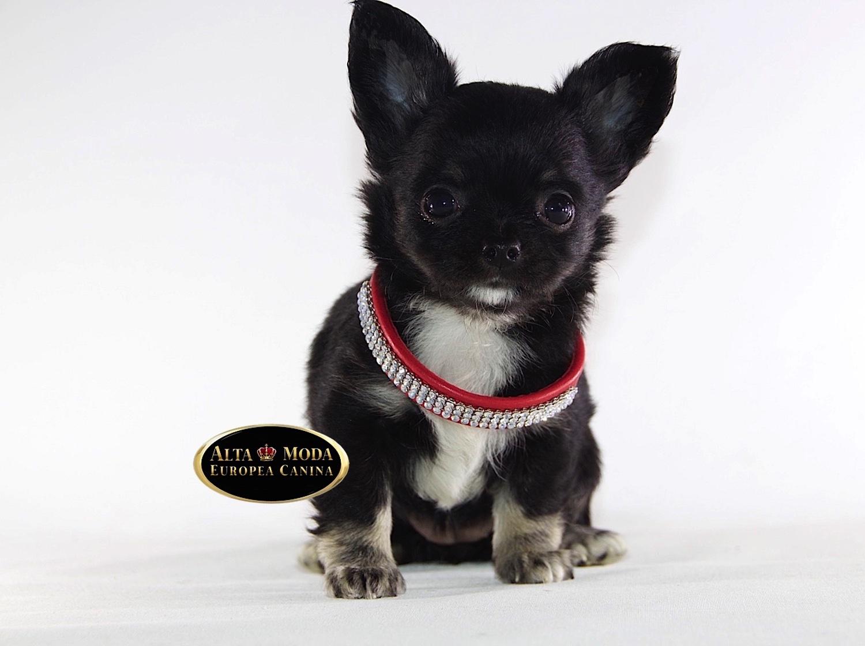 Collares para perros collares y correas para perros for Collares para perros