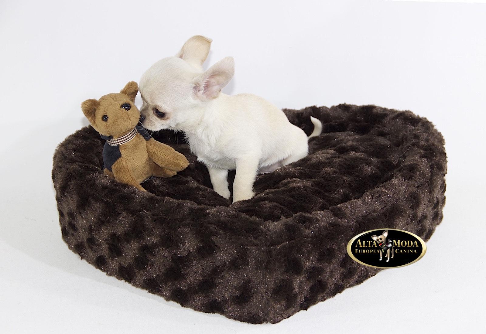 Camas perros cat logo online dormitorio canino alta moda europea canina - Casas para perros pequenos ...