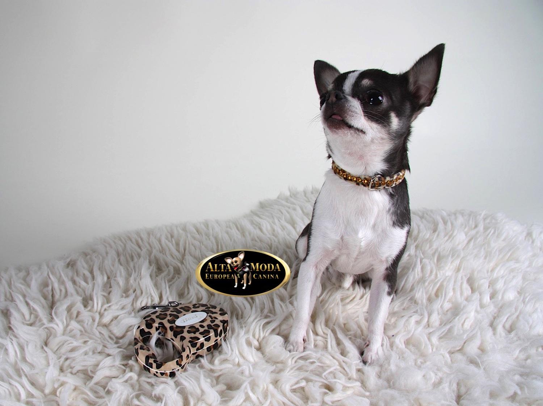 Collares y correas para perros alta moda europea canina for Collares para perros