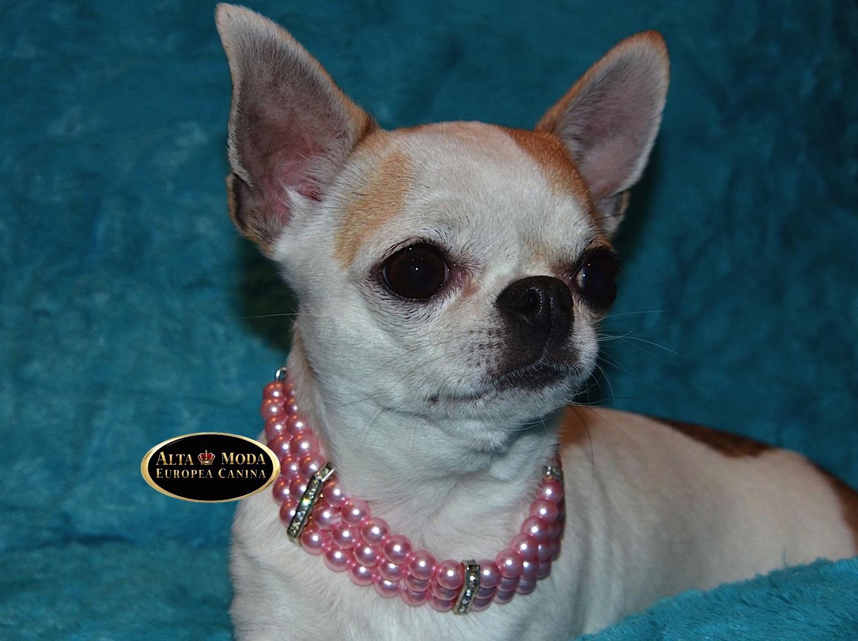 Collar elegante de perlas para perros alta moda europea for Como hacer un collar para perro
