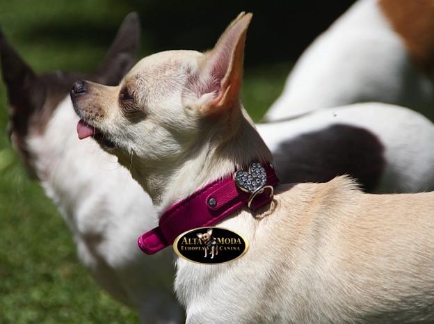 Alta moda europea canina moda canina de lujo perros - Novedades para mascotas ...