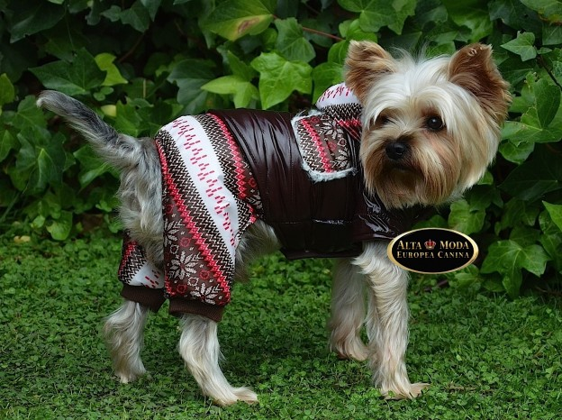 envio-pedidos-ropa-perros-transporte-de-moda-canina: