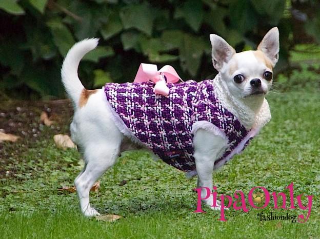 ropa-de-invierno-para-perros